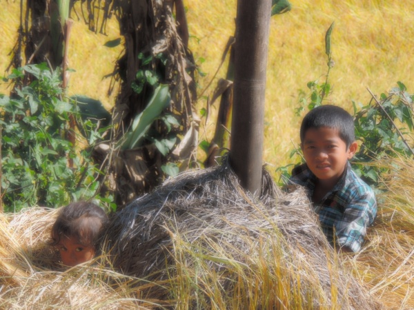 Children playing in the rice fields